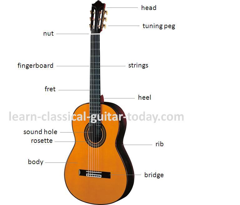 Classical Guitar Parts : classical guitar parts ~ Russianpoet.info Haus und Dekorationen